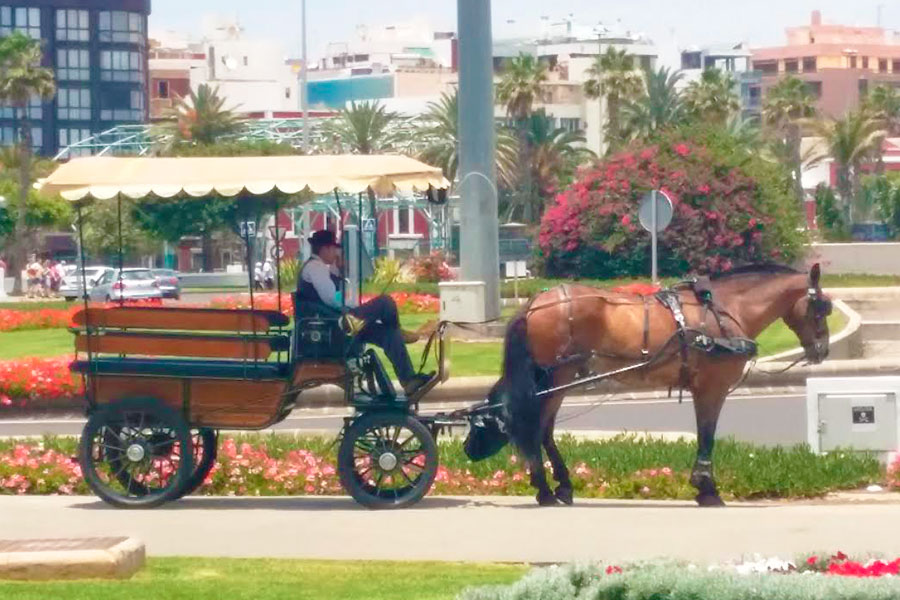 Alquiler de coche de caballos