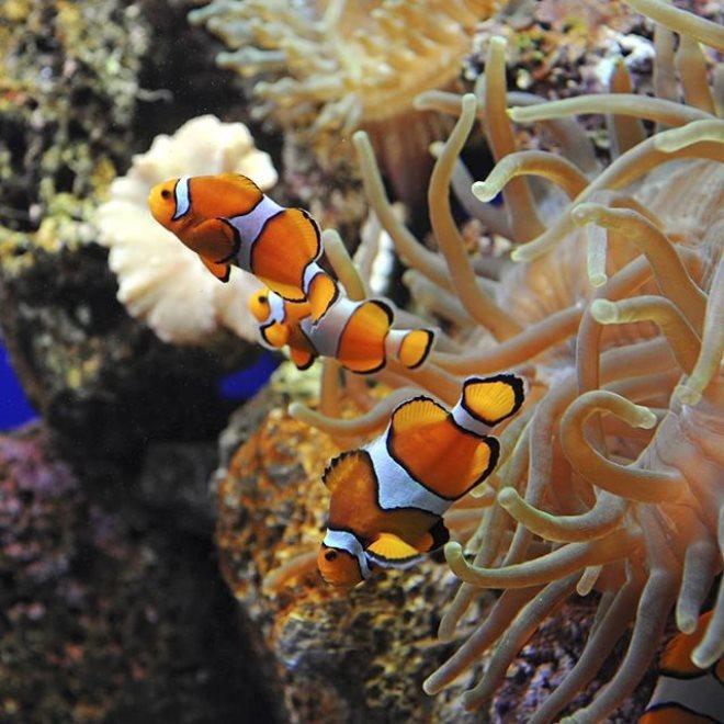 conocer-gran-canaria-acuario-poema-del-mar-1
