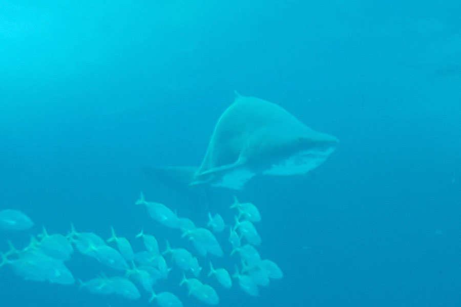 Acuario Poema del Mar